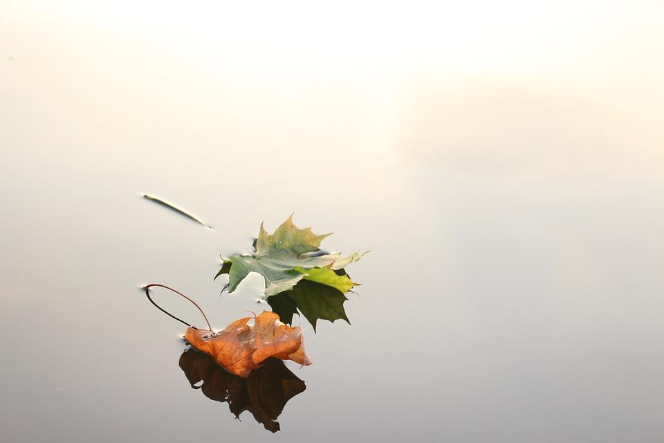 environment-term-paper-topics